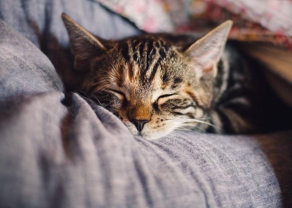 Veterinärer - För glada och friska husdjur